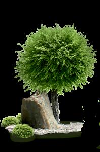 Ландшафтный дизайн сада в Краснодаре