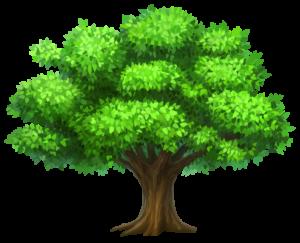 посадка деревьев и кустарников в Краснодаре