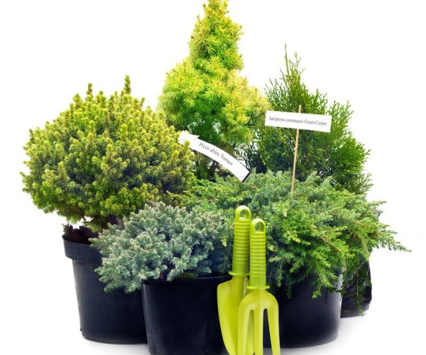 Доставка растений