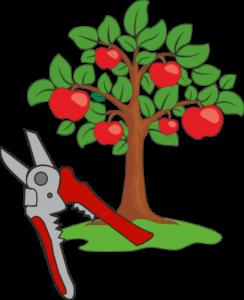 Обрезка деревьев и кустарников в Краснодаре